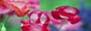 相互リンクサイト/花と風景の写真集