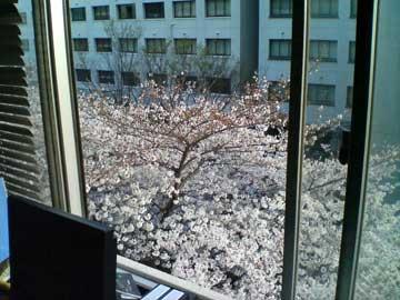 http://www5f.biglobe.ne.jp/~usshy/diary/2006/060328.jpg